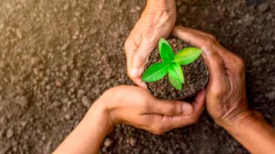 healing hands plant